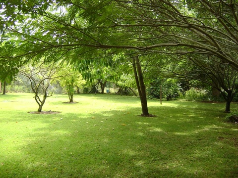 Orchards Farm Self Catering Komatipoort Trees