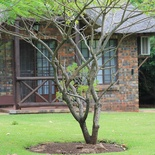 Komatipoort Self-Catering Cottage Exterior