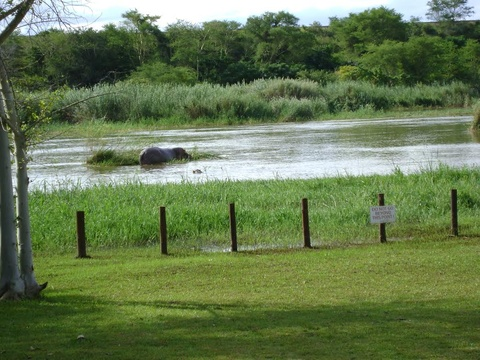 Orchards Farm Self Catering Komatipoort Hippo